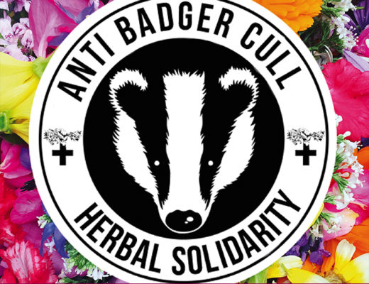 Image shows a badger face with 'Anti Badger Cull Herbal Solidarity' in a circle surrounding it. Medicinal herbs are in the background